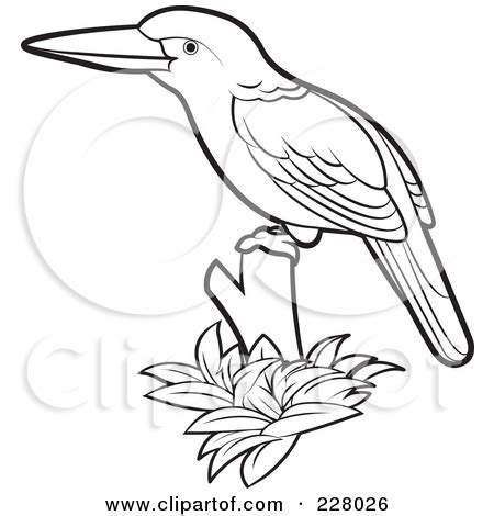 kingfisher bird coloring page king fisher clipart clipground