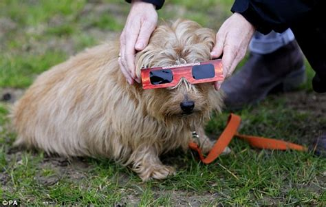 dogs and the eclipse how did your pets respond to the eclipse daily mail