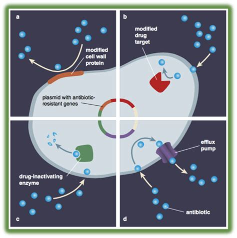 Antibiotics Also Search For Alteration Of Antibiotic Resistance Target Images
