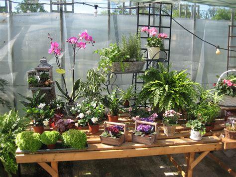 how to arrange indoor plants houseplants finchley nurseries garden centre