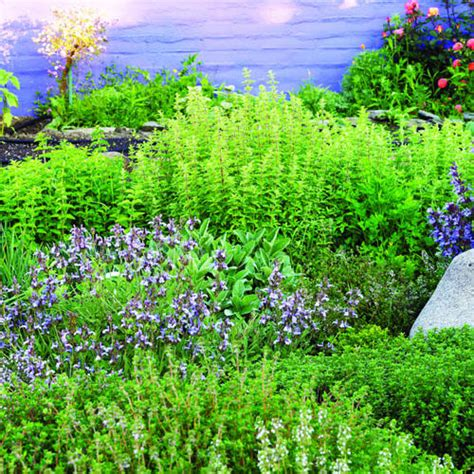 herb garden ashwiniahujaonline s weblog mediterranean herb garden sunset