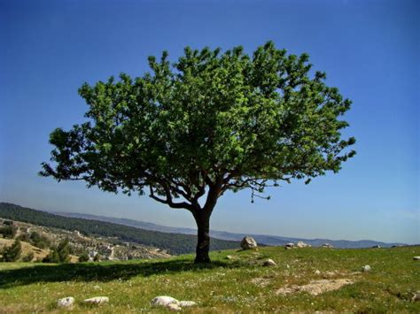 A Tree - plant a tree quote plant your tree of with