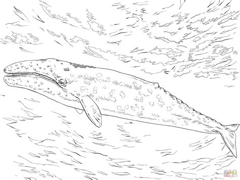 fin whale coloring page gray whale coloring page free printable coloring pages
