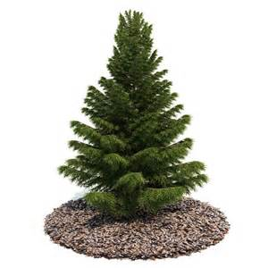 small pine tree 3d model cgtrader com