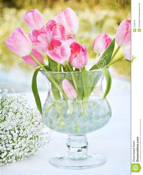 tulips in vase stock images image 7518144