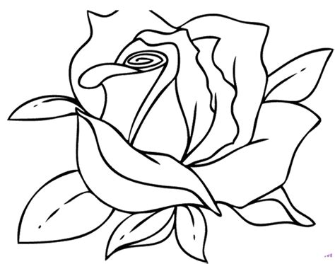 Coloring Pages More Images Roses 12 | beautiful rose flower coloring page 187 coloring pages