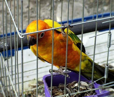 file bird in cage jpg wikimedia commons