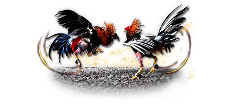 agen judi sabung ayam  terpercaya