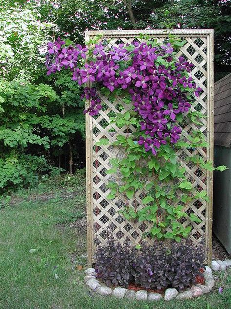 When Do You Take The Decorations by Clematis Indoor Gardening Jardinage