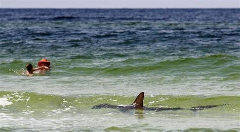 boat rs near melbourne fl photo shark cruises florida beach wlrn