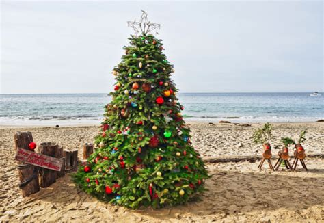 the greatest christmas trees of 2014 places to see in