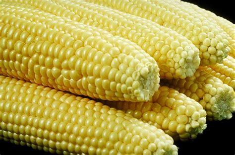 glutinous corn jagung manis bali pick fresh