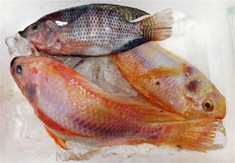 Harga Tepung Ikan Pakan Ternak cara membuat tepung ikan bebeja