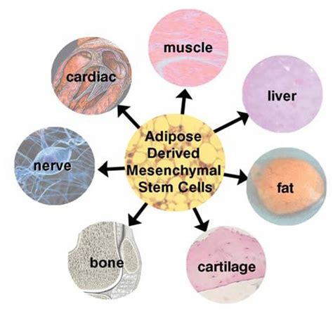 stem cell treatment now stem cell treatment now some alternative best stem cell therapy now widely available nsi stem cell