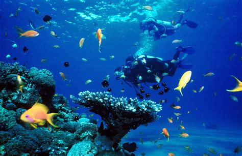 Wall Murals San Diego red sea scuba diving in taba and eilat aqua sport school