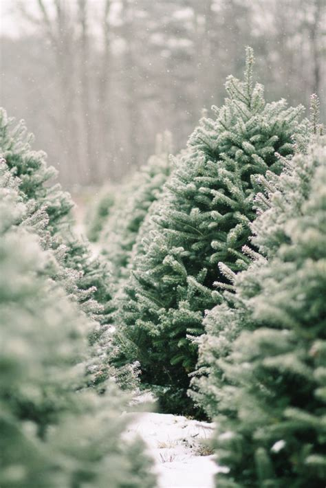 point pleasant christmas tree farm a cozy tree farm you need to visit house of funk
