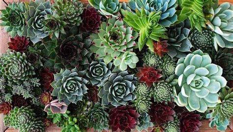 giardino con piante grasse giardini con piante grasse foto 4 39 nanopress donna