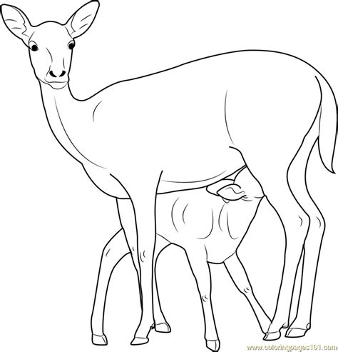 mother and baby deer coloring page free deer coloring