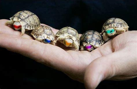 baby turtles pixdaus