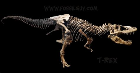 fossil forensics separating fact from in paleontology books fossilguy t rex tyrannosaurus dinosaur facts and