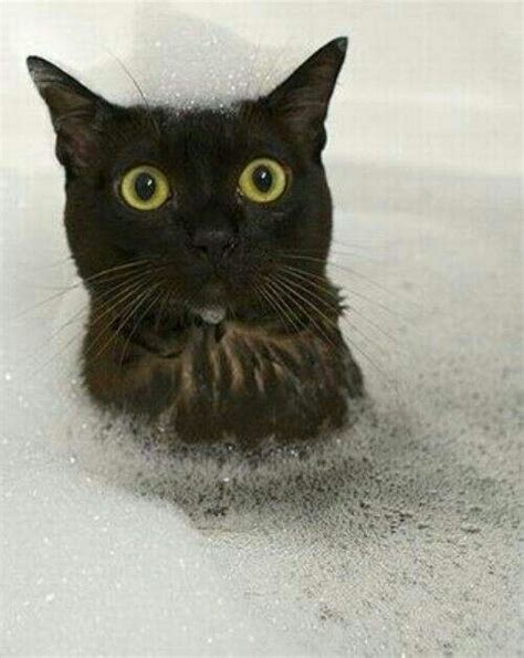 cat bathtub black cat in the bathtub cuddly cuties pinterest