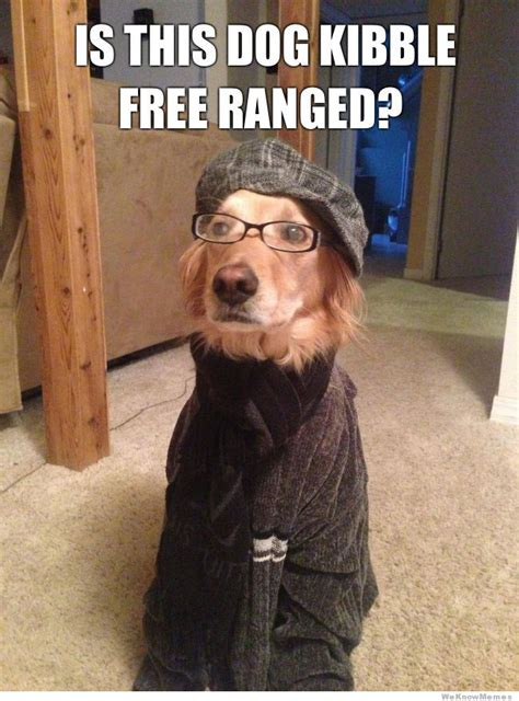 Hipster Dog Meme - hipster dog on food weknowmemes