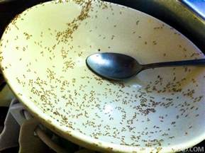 Small Ants In Bathroom Sink by The Battle Against Thailand S Bugs Tieland To Thailand