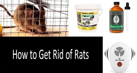how to get rid of rats in your backyard how to get rid of rats in your house and yard killing