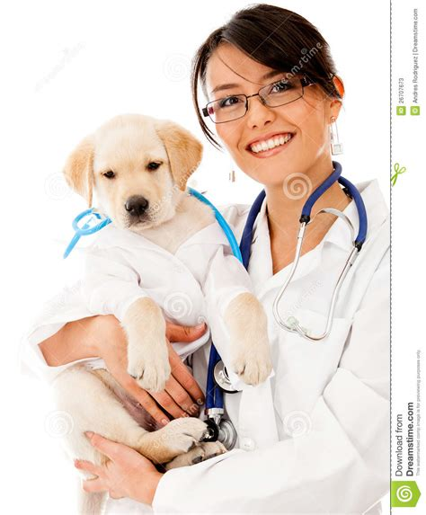 puppy vet puppy at the vet stock photos image 26707673