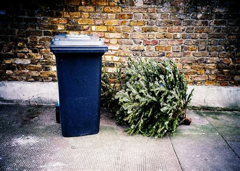 how to recycle your christmas tree garden club