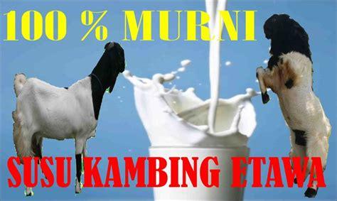 jual susu kambing etawa surabaya susu kambing etawa surabaya