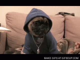 gif pug pug gif find on giphy
