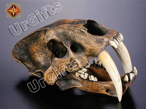 sabre tooth tiger skull for sale replica smilodon saber tooth sabertooth tiger 1 1 skull b