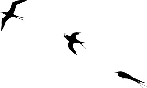 birds flying clip art cliparts co