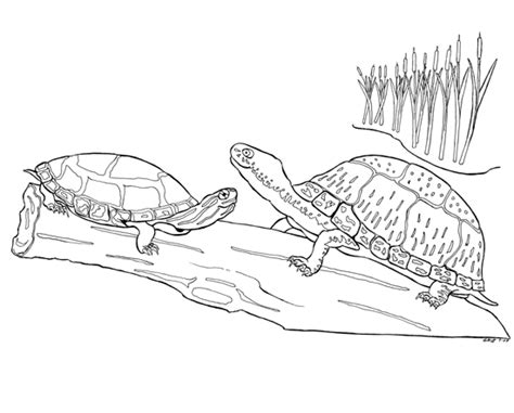 pet turtle coloring page august 2009 butch griz painting blog