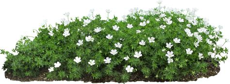 A Flower Bed With Flowers On A Transparent Backgro By Flower Garden Png