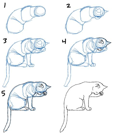 How To Draw A Cat savanna williams how to draw cat bodies in poses