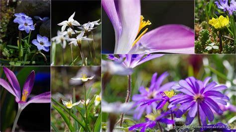 bolletjes tuin hoera lente tips voor hommels en vogels in je tuin