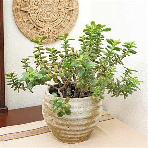Blument Pfe Aus Ton 388 by Zimmerpflanzen Bilder Gem 252 Tliche Deko Ideen Mit Topfpflanzen
