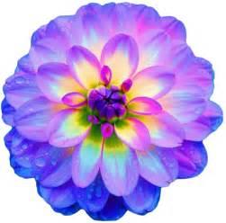Transparent Flower Images - transparent flowers images amp pictures becuo