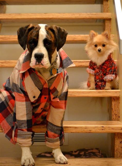 flannels for dogs secret identities dogs in fall adorable animals plaid dogs puppy fall flannels