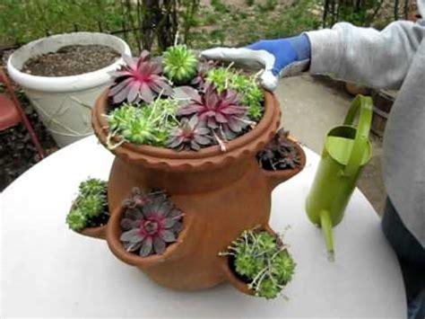 Strawberry Jar With Herbs Laidback Gardener Strawberry Jar Planter