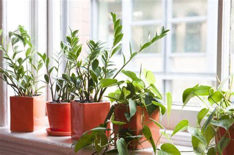 fensterbrett pflanzen fensterbank dekoration 57 ideen wie sie das potenzial