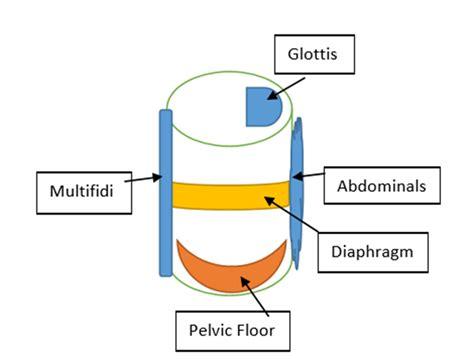Pelvic Floor Drop by Athletes Potential