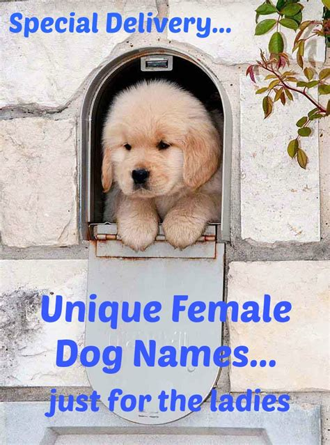p names for dogs names popular ideas for the puppy