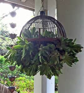 cute hanging succulent plant ball for the outdoor garden