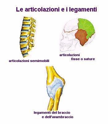 articolazione mobile lezione di scienze le ossa fuoriclasse