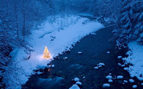forest original christmas tree river trees snow tree forest wallpapers hd desktop and mobile backgrounds