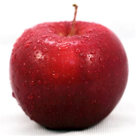 apple red red apple photograph by john rizzuto