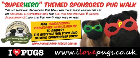 sponsor a pug uk themed sponsored pug walk i pugs